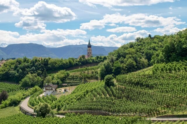 South Tyrol South vineyards
